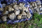 Truffles: How to Buy, Prepare and Eat the Ultimate Fancy Delicacy