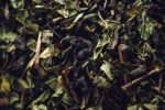 Cooking with Tea Leaves