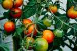Weeds and More: Cutting food miles, delivering freshness